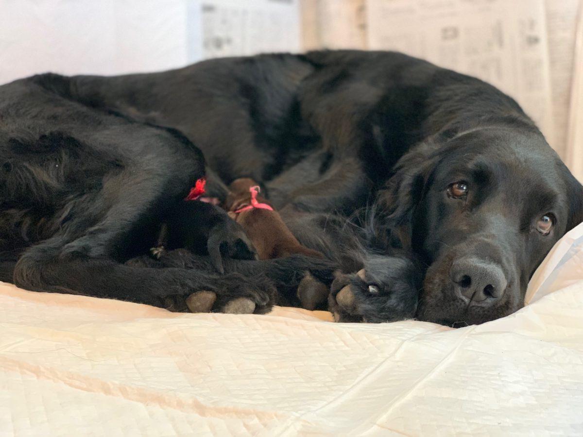 ノースポイントケンネルの子犬2